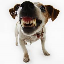 Dog Aggression Solution - Online Course